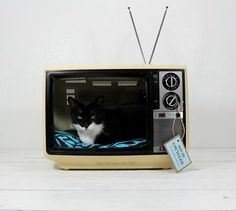 vintage suitcases and televisions, and sometimes computer monitors, into funky little rest havens for your kitty or small pup.