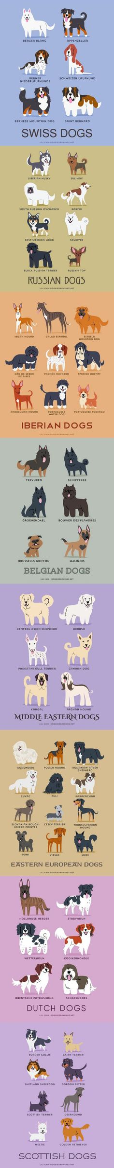 Dogs of the World by Lili Chin, DoggieDrawings.net - Buy Lili's art on Etsy and Society6. #dogbreeds #infographic #art
