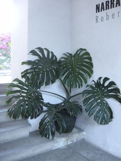 Inspiration: philodendron silhouette with stark walls. Deco, Indoor Plants, Plant Leaves, Landscape, Modern, Flowers, Projects, Condo, Walls