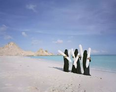 Scarlett Hooft Graafland's new work is central to Shores Like You. In addition to this work, Huis Marseille will show series of photographs by the Brazilian Mario Cravo Neto (1947-2009), Nigerian Rotimi Fani-Kayode (1955-1989) and South African Zanele Muholi (1972). Furthermore, a series of unique...