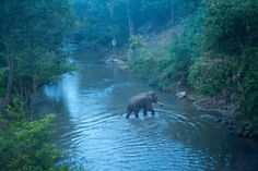 Elephant View Room Near Chiang Mai Thailand