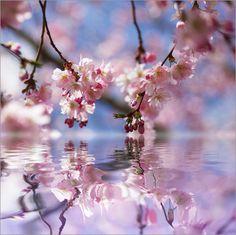 I have a Dream Mandelblüten Träume Poster von Tanja Riedel