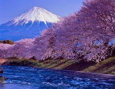 "lifeisverybeautiful: ""Mt.Fuji, Cherry Blossom, Japan """