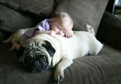 Pug love! It's like looking into the future.