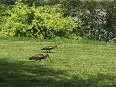 The birds in Holland Park Resort