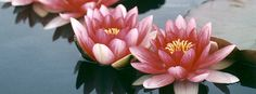 Water Lilies Facebook Cover CoverLayout.com