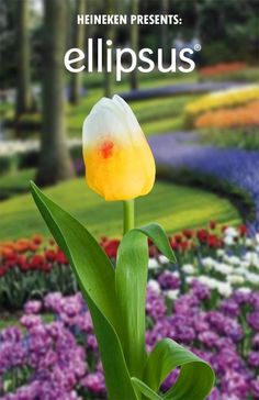 """From spaghetti trees to whistling carrots, we've compiled some of our favorite """"plant hoaxes"""" and garden gags.   -- Ton April Fool's Day in 2012, Heineken unveiled their alleged hybrid bulb, Ellipsus, which resembled a glass of Heineken (foamy white head, golden color, and even their signature red star along the side) and would have brought a whole new meaning to the term """"beer garden""""."""