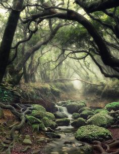 ~Mystical Forest ~ Source by kryziakreations Beautiful World, Beautiful Places, Beautiful Pictures, Foto Nature, Landscape Photography, Nature Photography, Photography Tips, Portrait Photography, Wedding Photography