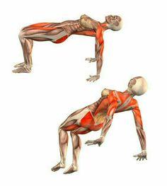 43 best yoga anatomy images  yoga anatomy yoga poses