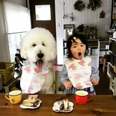 This Little Girl and Her Giant Poodle are Everyone's Little People, Little Girls, Giant Poodle, Samoyed, Japanese Girl, Funny Cute, Peace And Love, Poodles, Story Books