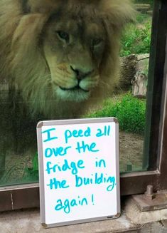 Animals working their way into the 'Hall of Shame' – 40 Pics