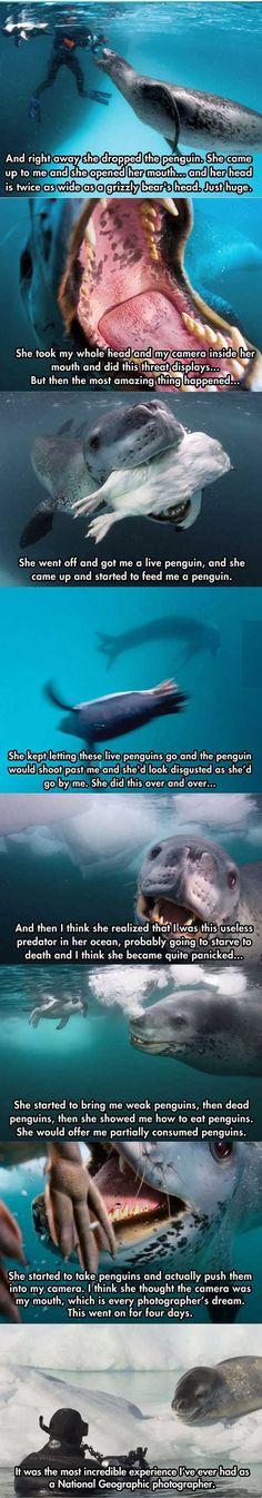 Good guy leopard seal (9 Pics)! - Joindarkside