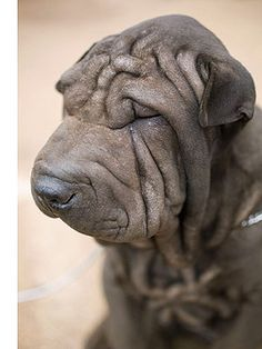 Wrinkles. (Photo on fStop by Tobias Titz) #photography #cuddly