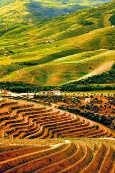 """ Douro's River Valley Vineyards "" !...I Like It Natural And Unique Always In My Country Portugal !... http://samissomarspace.wordpress.com. To learn more about #Porto click here:  http://www.greatwinecapitals.com/capitals/porto"