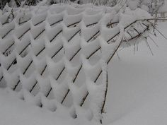 Willow fence under snow