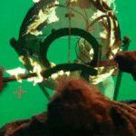 A ver Cómo el Juego de Tronos ha Hecho un Zombie Oso Polar Podría Ser la Mejor Parte de la Noche anterior Episodio