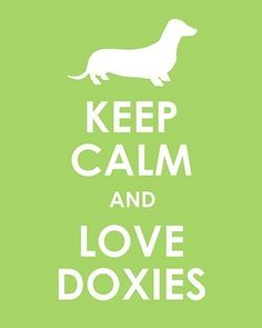 Keep calm and love doxies!