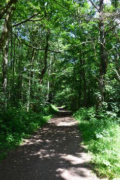 #nature #arbre #paysage #bois #foret #sousbois