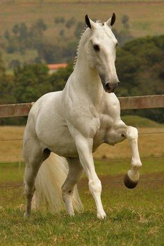 White grey Andalusian horse /lnemnyi/lilllyy66/ Find more inspiration here…