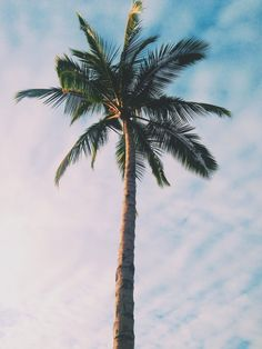 Find images and videos about summer, sky and palm trees on We Heart It - the app to get lost in what you love. Aesthetic Iphone Wallpaper, Aesthetic Wallpapers, Cute Wallpapers, Wallpaper Backgrounds, Wallpaper Paisajes, Palm Background, Foto Real, Summer Wallpaper, Beach Aesthetic