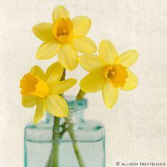 "Fine Art Flower Photography Print """"Yellow Daffodils No. Artistic Photography, Fine Art Photography, Flower Photography, Spring Photography, Photography Ideas, Art Floral, Flower Prints, Flower Art, Lotus"