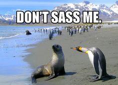 Don't sass me!