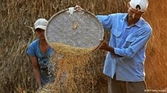 India's food aid - #cofogIN #cofog1090IN #isicIN #isic8412IN Picture: An Indian farmer winnows rice at Milanmore village on the outskirts of Siliguri on November 23, 2011. India is the world's second-largest producer of wheat and rice. (Photo: AFP)