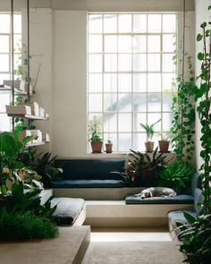 Lounge in a former Victorian tannery completley gutted and transformed into a lighting company's showroom and open plan office full of plants, Southwark, London, UK : RoomPorn Steel Columns, Interior Architecture, Interior Design, Workplace Design, Layout, Black Walls, Lounge Areas, Brutalist, Office Interiors