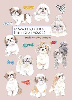 17 elements of hand drawn watercolor Shih Tzu images. This super cute doggy collection is great for cards, scrapbooking or any digital project you like to. ***Please note that the rug shown in the sample is in my another Rugs set. Shih Tzus, Shih Tzu Hund, Perro Shih Tzu, Baby Shih Tzu, Shih Tzu Puppy, Chibi Dog, Cute Dog Drawing, Watercolor Rug, Art Aquarelle