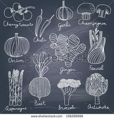 Tasty vegetables in vector set - cherry tomato, chili, garlic, champignon, onion, ginger, fennel, asparagus, beet, broccoli, artichoke. Tast...
