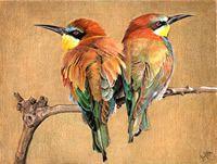 coloured pencil birds