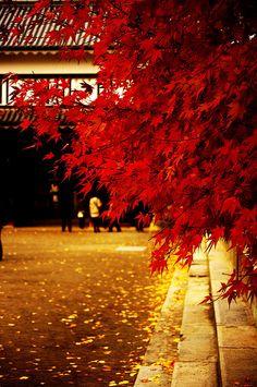 Ueda-jo #nagano #japan Nagano Japan, All About Japan, Autumn Rain, Autumn Scenery, Visit Japan, Japan Travel, Beautiful Landscapes, Nature, Sunrise