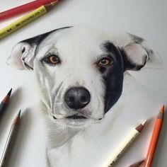 Dog. Wildlife and Domestic Animal Drawings. By Paul miller.