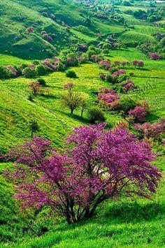 purple trees & green hills