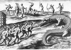 Timucua Indians Food | How the Indians Kill Alligators - (Alligator Hunt)