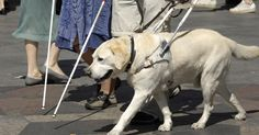 What Guide Dogs for The Blind Have Learned about Dog Training