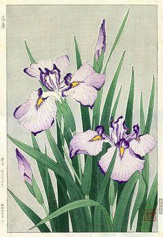Iris, White  by Kawarazaki Shodo, 1954  (published by Unsodo)