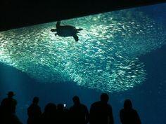Monterey Bay Aquarium, Monterey, California, United States