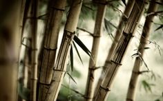 Fond d'écran hd : bambous