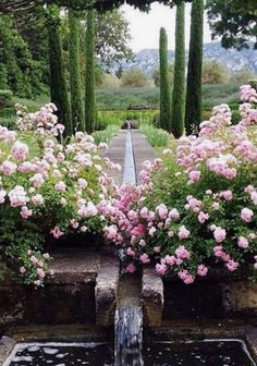 Doses at the forefront of a beautiful garden