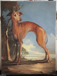 """HAND PAINTED ITALIAN GREY HOUND ROYALTY DOG. OIL ON STRETCHED CANVAS 18"""" X 24"""""""