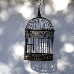 Could be a cool room accessory. I like that the bird cage is empty-- kind of symbolic. Revolutionary Girl Utena, Modern Aesthetics, Fantasy Story, Bird Cages, Room Accessories, The Girl Who, Wordpress Theme, Exterior Design, My Best Friend