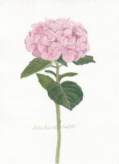 Pink Hydrangea Original Watercolor by wandazuchowskischick