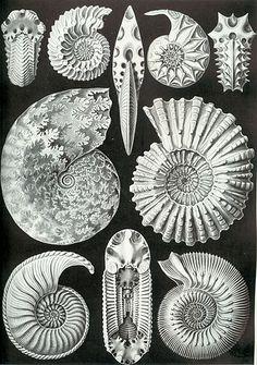 Book Kunst Formen der Natur - Ernst Haeckel  #fosils