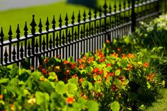 A short black wrought iron perimeter fence with low ground cover and red pansies.