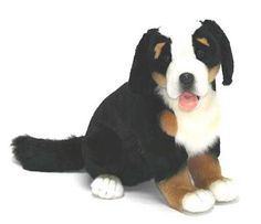 """Smirnoff"" Bernese Mountain Dog"
