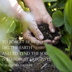 To forget how to dig the earth and to tend the soil is to forget ourselves. -Mahatma Gandhi   / / / / https://www.facebook.com/Foodinc/photos/a.10150173705776160.304007.73304591159/10153043361916160/?type=3