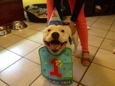 32 Ridiculously Happy Animals Celebrating Their Birthday