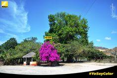 Javier Gamboa #YoSoyColor  Nikon D3100