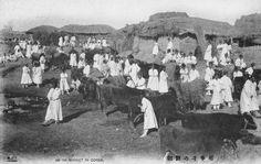 An ox market in Korea, ca.1904.jpg (1453×918)